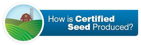 How is Certified Seed Produced?