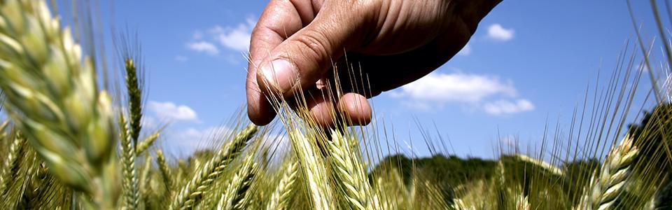Good crops start with good seedalton